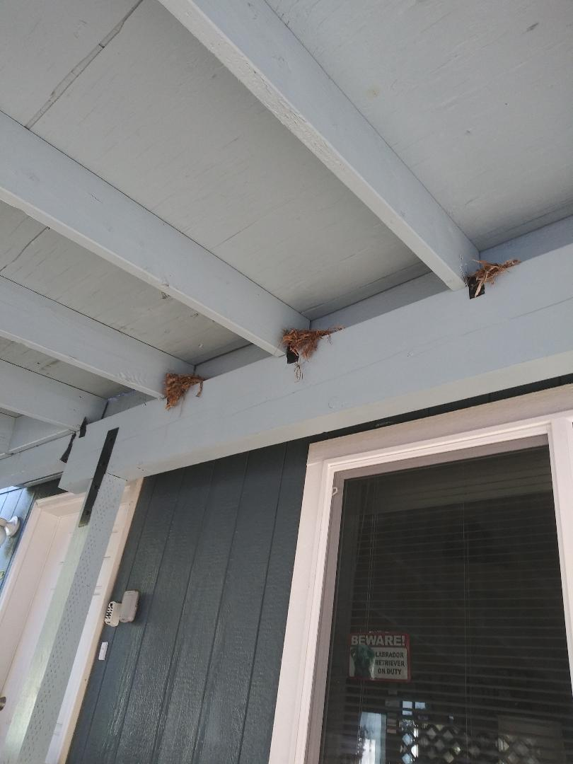 Triple Carport Nest