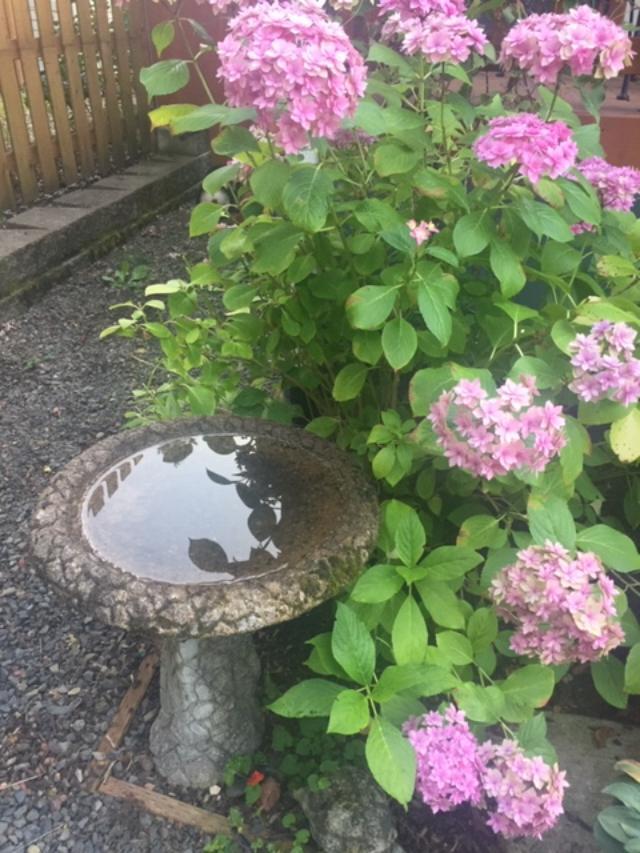 Bird Bath 2