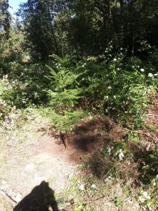 Happy Valley Hidden Tree 2