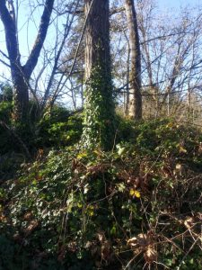 Gladstone Nature Park 7