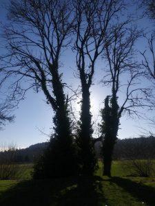 Triple tree 3
