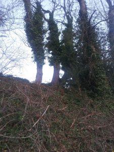 Triple tree 6