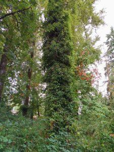 SALVATION TREE 1
