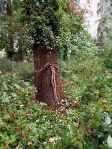 SALVATION TREE 2 (1)