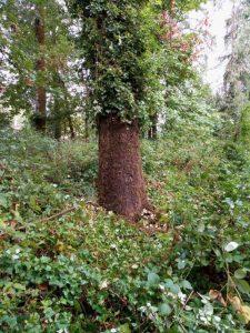 SALVATION TREE 3